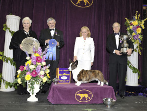 2014 herding winner Coco Posh 300x226 2014 Westminster Dog show: Sky in the Making