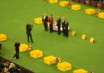 2014 Westminster Dog Show